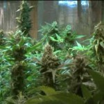 Medical Marijuana Growers Protest Raid