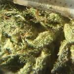 Blue Lagoon Marijuana Strain
