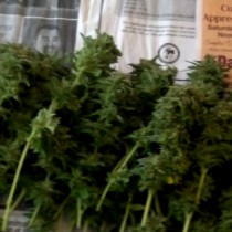 harvest_weed