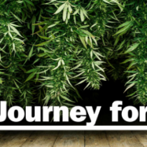 journey_for_oil_marijuana_kids
