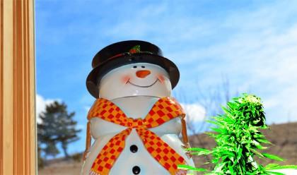 weed-snowman